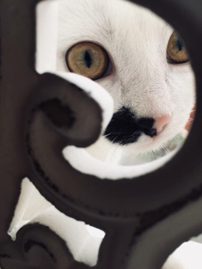 Mensen die tegen hun huisdieren praten…