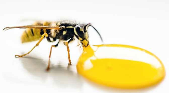 Dé tips tegen wespen!